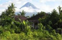 Desa Wisata Jamur Yogyakarta