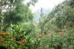 Desa Wisata Turgo Yogyakarta