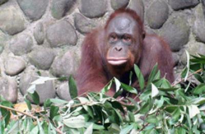 Taman Satwa Wildlife Rescue Centre