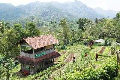 Pertanian Organik Subur Nggabur