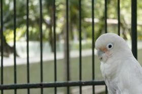 Salah satu burung di Gembira Loka Zoo Yogyakarta