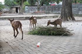 Rusa di Gembira Loka Zoo