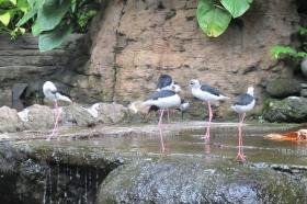 Flamingo di Gembira Loka Zoo