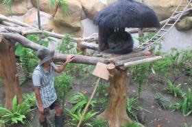 Binturong di Gembira Loka Zoo