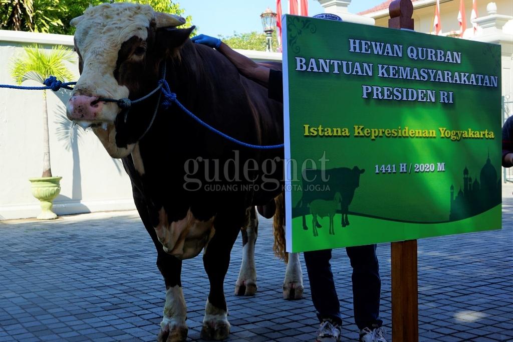 Iduladha 1441 H/2020 DIY, Jokowi Sumbang Dua Ekor Sapi Metal