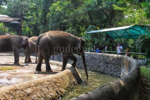 Gembira Loka Zoo Kembali Dibuka