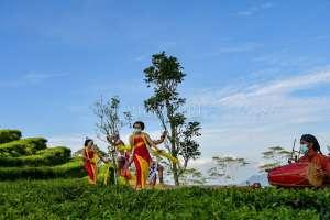 Wisata ke Nglinggo Bisa Lihat Bidadari Menari di Atas Daun Teh